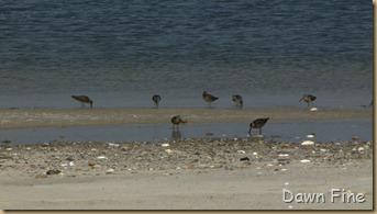 south beach birding_046