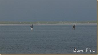 south beach birding_048
