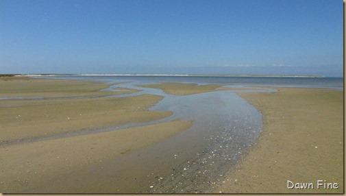 south beach birding_106