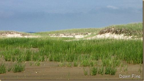 south beach birding_102