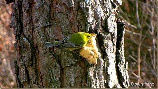Birds and bark butter_032