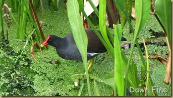 Green Cay_120