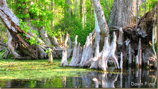 Silver Springs State Park_059