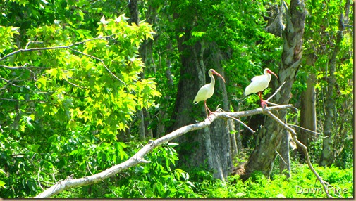 Silver Springs State Park_141