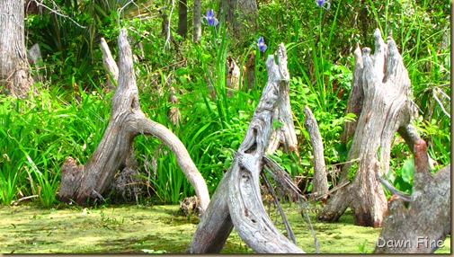 Silver Springs State Park_215