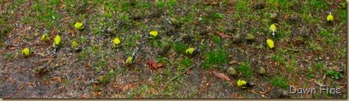 yard birding_003