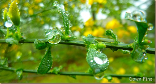 Water droplets and flowers_097