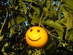 naranja sonrrie