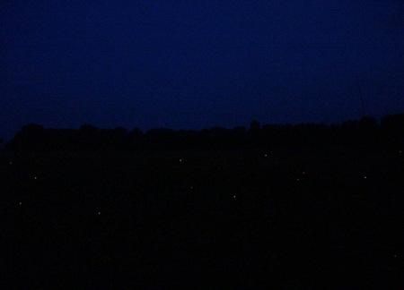 luciernagas de noche