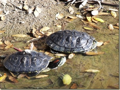 Can Red Eared Sliders Eat Cat Or Dog Food