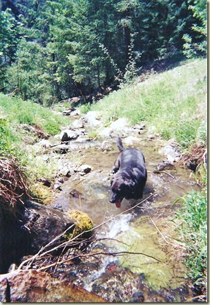 06 Carson in Lake Creek Siskiyou NF OR Summer 2003 (703x1024)