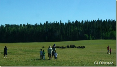 08 People & beefalo in meadow Hwy 67 NR GRCA NP AZ (1024x584)