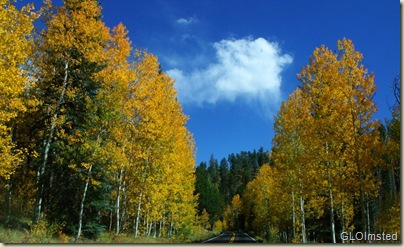 02 Golden aspen line the road to Walhalla NR GRCA NP AZ (1024x621)