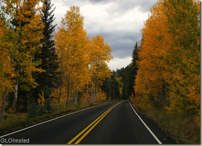 10 Golden aspen line the road home from Walhalla Plateau NR GRCA NP AZ (1024x733)