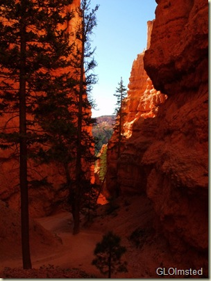 10 Winding between fins & hoodoos on Navajo Loop trail Bryce Canyon NP UT (768x1024)
