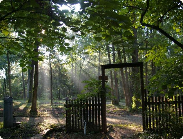 Rays of sun shining through the trees