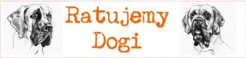 ADOPCJE - Ratujmy Dogi!