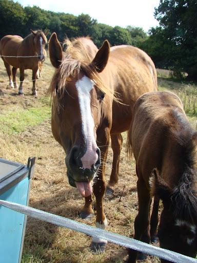 Vos plus belles grimaces de cheval et photos gag .... - Page 5 DSC08486