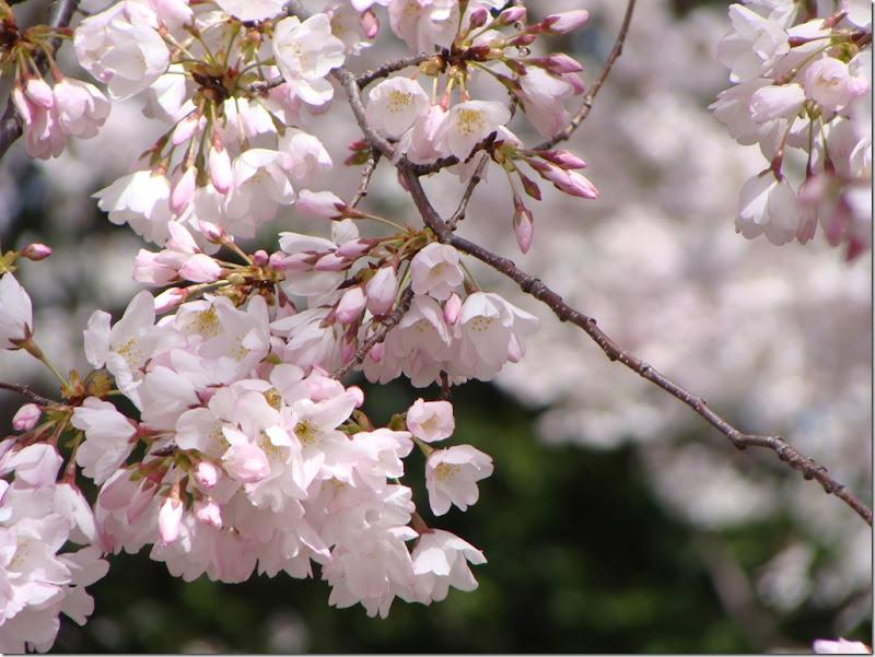 83Best Blossom