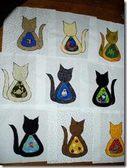 cat squares