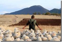 pecore tratturo