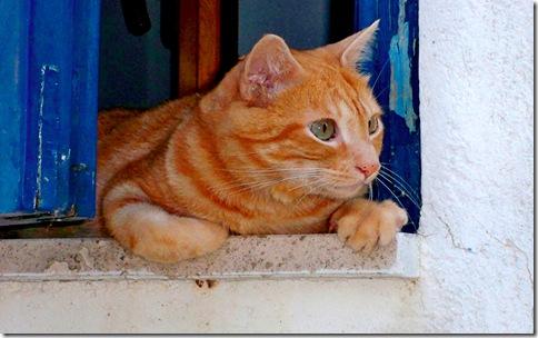 [1280x800]-gatto-alla-finestra