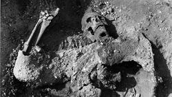 esqueleto- dura europos