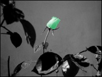 Rosas 03 [640x480]