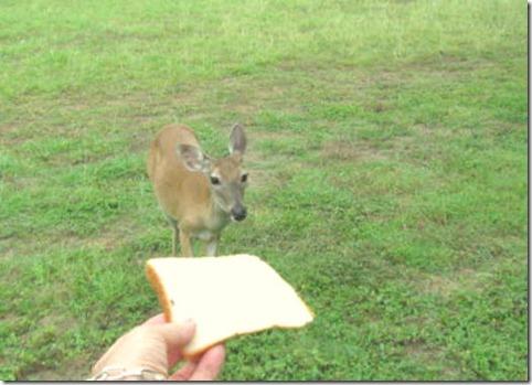 bread eater