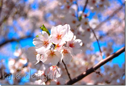 DC - Cherry Blossom Festival & Smithsonian 016