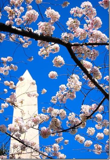 DC - Cherry Blossom Festival & Smithsonian 018