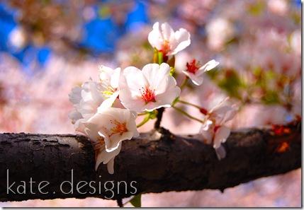 DC - Cherry Blossom Festival & Smithsonian 037