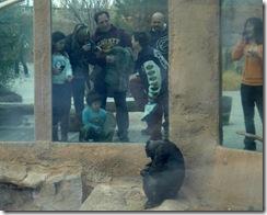 chimps1