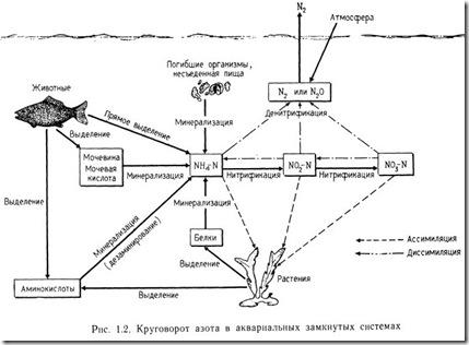 Азотный цикл