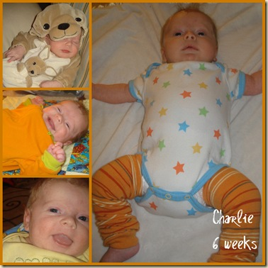 Charlie 6 wk collage