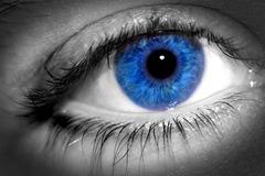 Blue%20Eye%20Macro