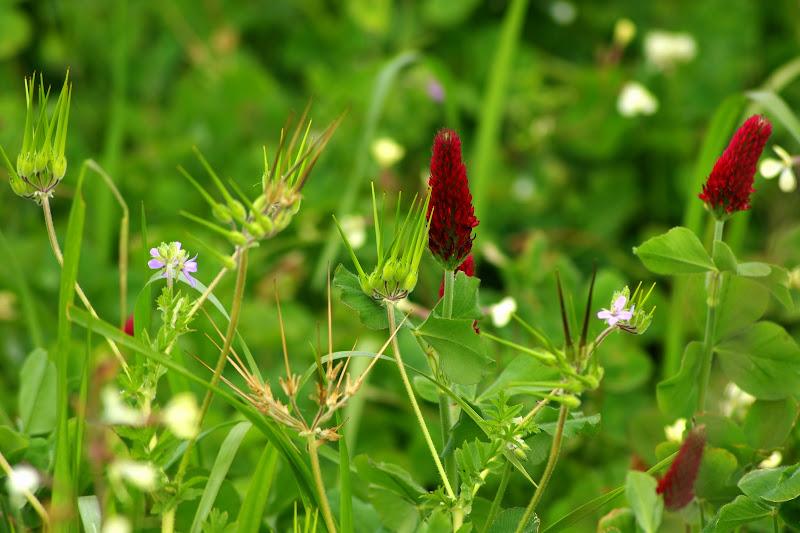 Alentejo em flor
