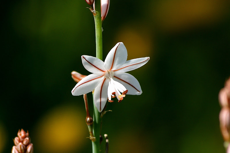 Detalhes da Primavera, Flore silvestres