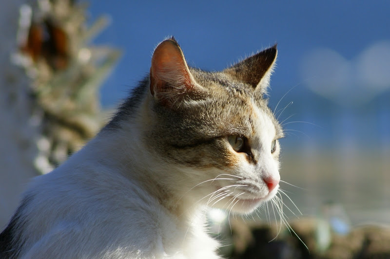Gatos de Setúbal