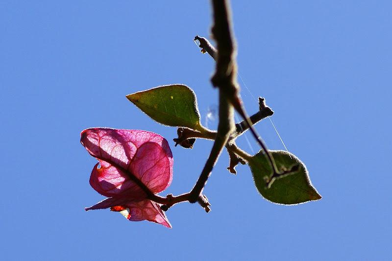 Sinais da Primavera