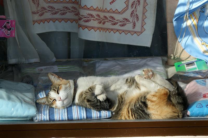 O gato na montra... ao sol