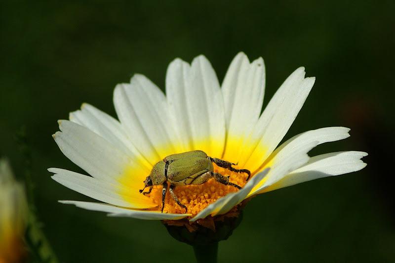 A flor e o insecto