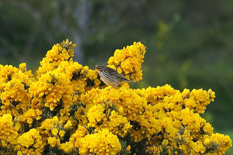 O pardal e as flores amarelas
