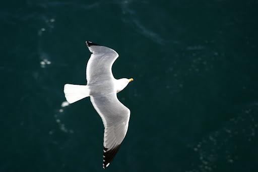 Voamos qual gaivotas, lado a lado.