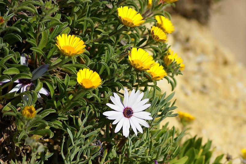 Flores algarve