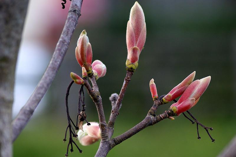 O despontar da primavera em Carrigaline, Irlanda