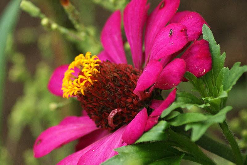 Cores da primavera, flores