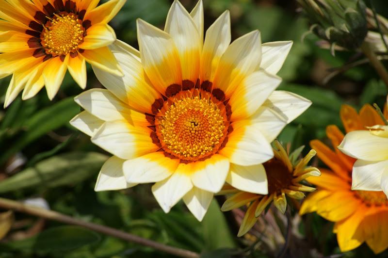 Amarelo e branco, flores