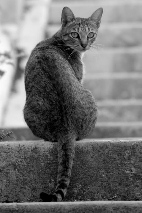 O gato desconfiado