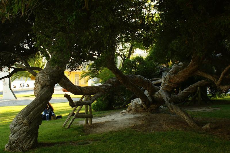 A árvore, Setúbal